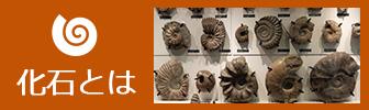 化石のバナー