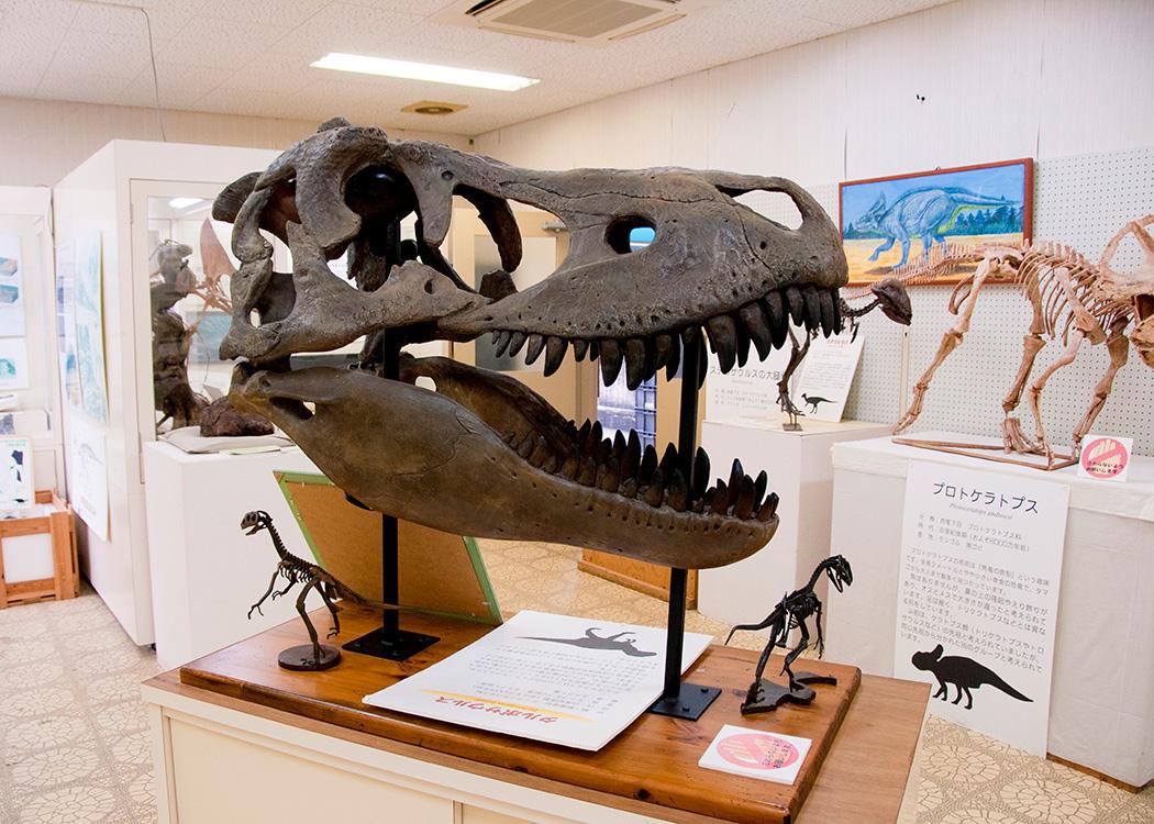 御所浦白亜紀資料館のタルボサウルスの頭骨