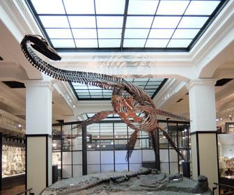 国立科学博物館のフタバスズキリュウ