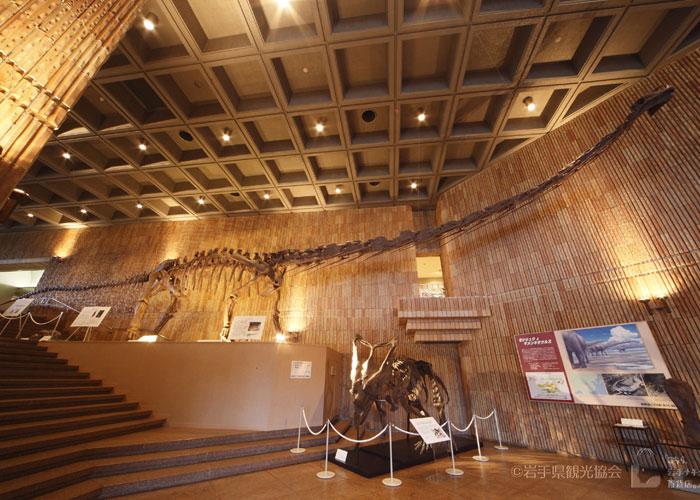 岩手県立博物館のマメンチサウルスの全身骨格