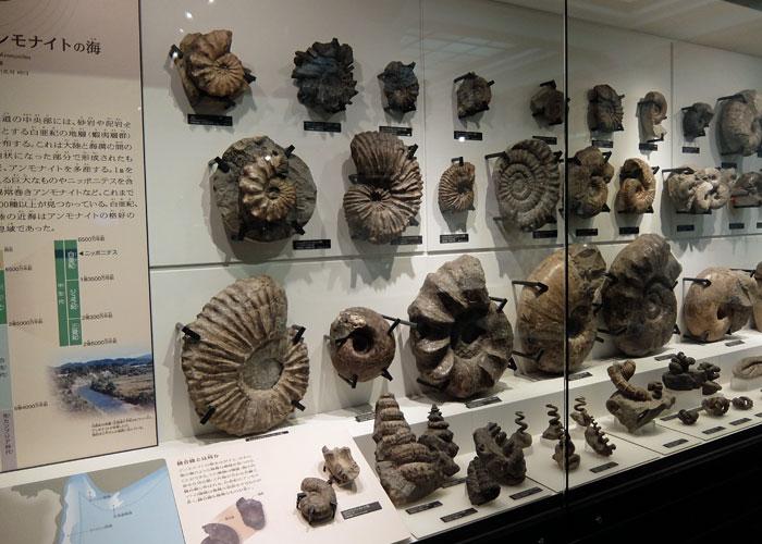 国立科学博物館のアンモナイトの海