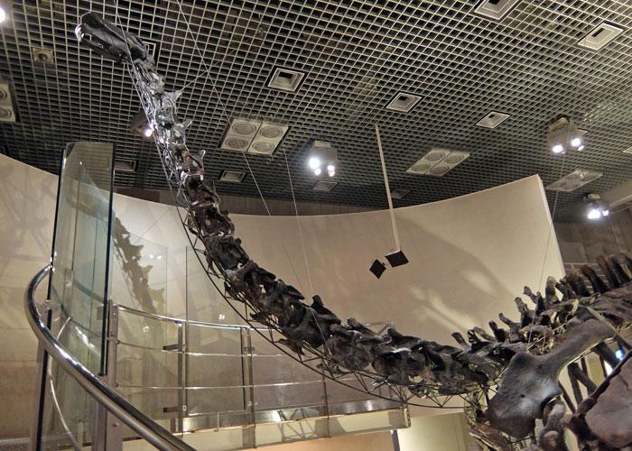 国立科学博物館のアパトサウルスの全身骨格
