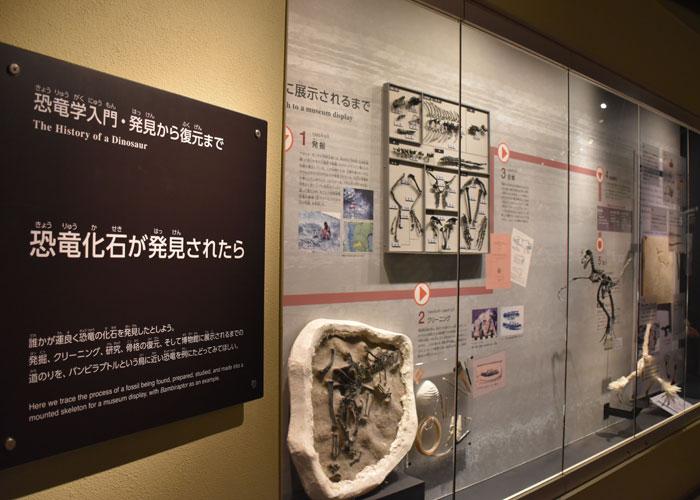 バンビラプトルの発掘の様子の展示(国立科学博物館)