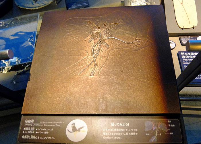 始祖鳥の化石のレプリカ