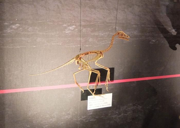 国立科学博物館に展示されている始祖鳥の全身骨格