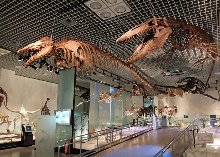 国立科学博物館・地球館地下2階の水生爬虫類と水生哺乳類の展示