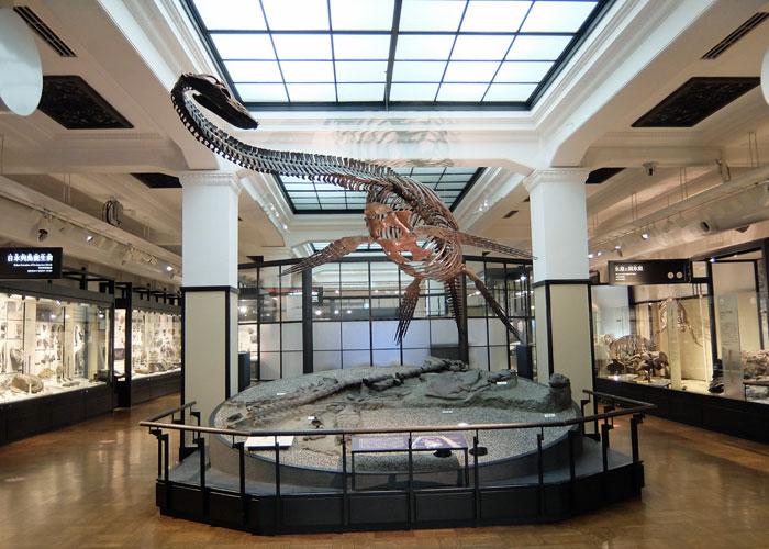 国立科学博物館のフタバスズキリュウ全身骨格
