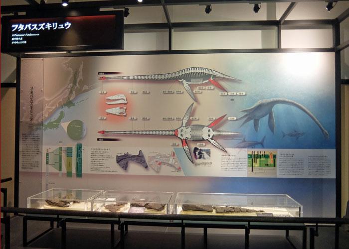 国立科学博物館のフタバスズキリュウの解説コーナー