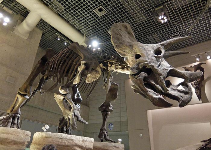 国立科学博物館のトリケラトプスの全身骨格