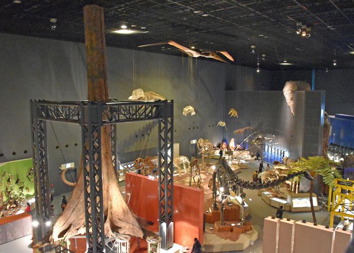 神奈川県立生命の星・地球博物館の展示室