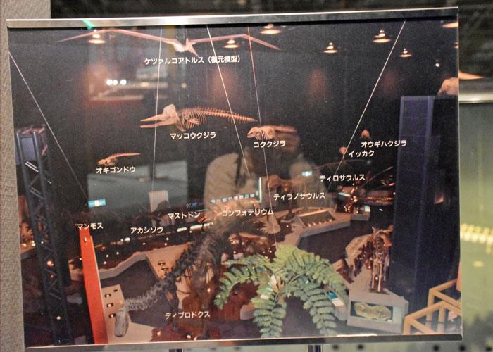 神奈川県立生命の星・地球博物館の展示室の説明