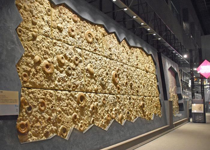 アンモナイトの壁(神奈川県立生命の星・地球博物館)