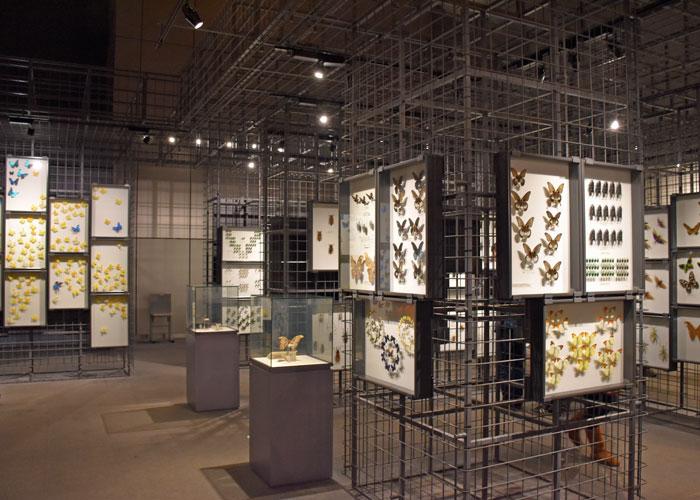 チョウの標本(神奈川県立生命の星・地球博物館)