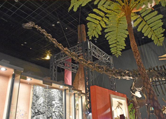 神奈川県立生命の星・地球博物館のディプロドクスの全身骨格の頭部