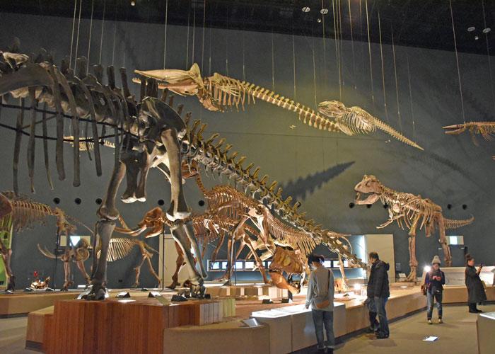 神奈川県立生命の星・地球博物館の恐竜の展示室