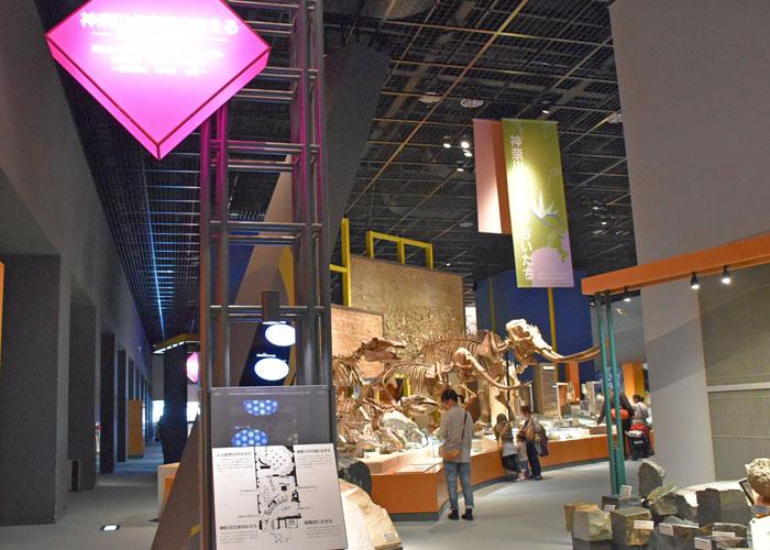 神奈川県立生命の星・地球博物館「神奈川の自然を考える」