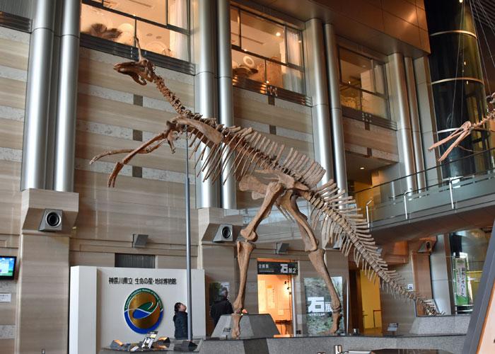 チンタオサウルスの全身骨格(神奈川県立生命の星・地球博物館)