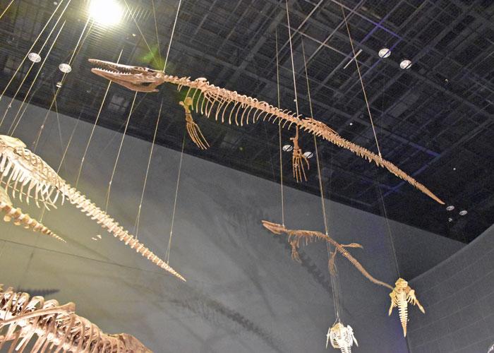 ティロサウルスの全身骨格(神奈川県立生命の星・地球博物館)