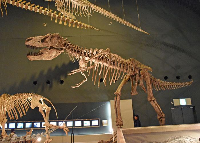 神奈川県立生命の星・地球博物館のティラノサウルスの全身骨格