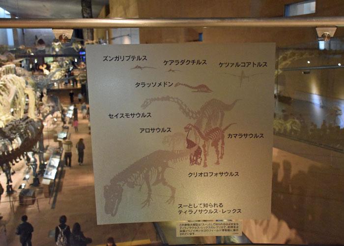 恐竜の展示案内:3階から見た北九州市立いのちのたび博物館