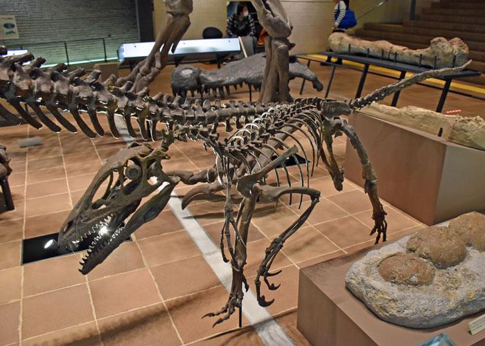 デイノニクスの全身骨格・北九州市立いのちのたび博物館