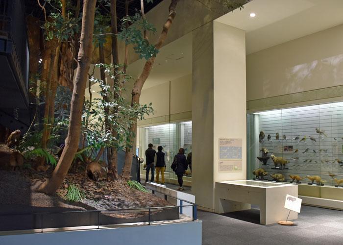北九州市立いのちのたび博物館の生命の自然発見館の展示