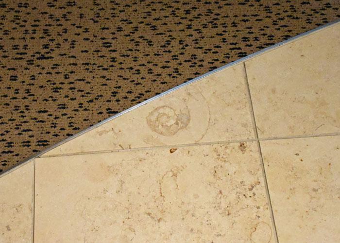 大理石の中のアンモナイトの化石:北九州市立いのちのたび博物館