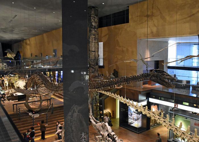 首長竜タラソメドンの全身骨格:北九州市立いのちのたび博物館
