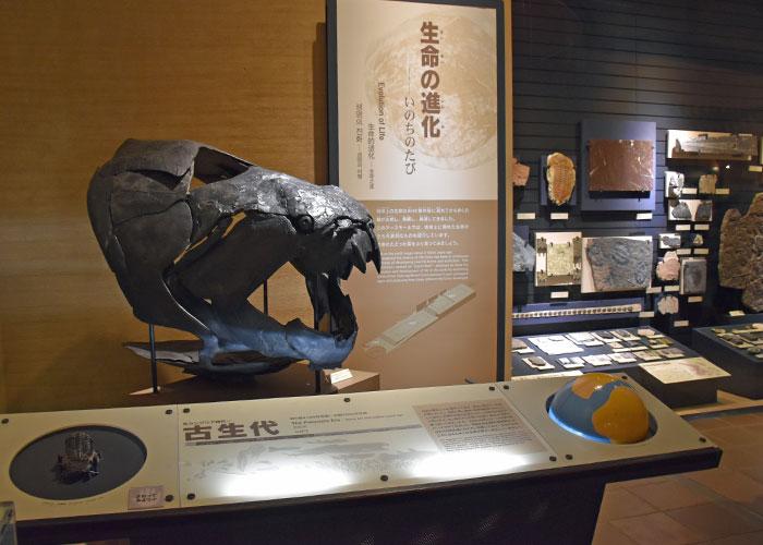 北九州市立いのちのたび博物館の古生代の展示