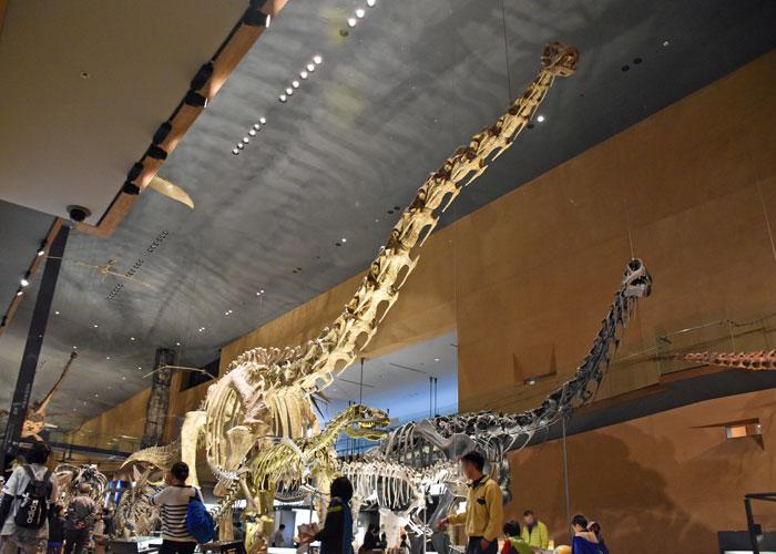 セイスモサウルスの全身骨格模型・北九州市立いのちのたび博物館