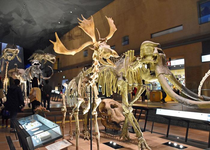 北九州市立いのちのたび博物館のナウマンゾウとヤベオオツノジカの骨格模型