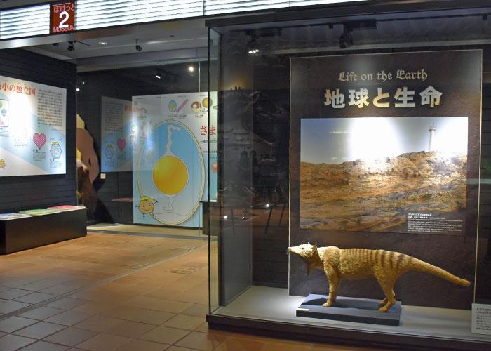 北九州市立いのちのたび博物館のぽけっとミュージアム