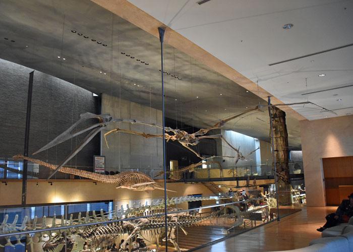 最大級の翼竜ケツァルコアトルスの全身骨格:北九州市立いのちのたび博物館