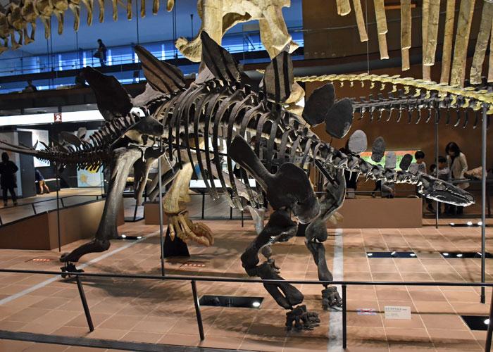 ステゴサウルスの全身骨格模型・北九州市立いのちのたび博物館