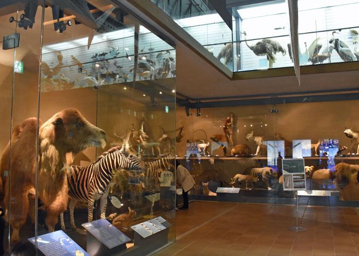 北九州市立いのちのたび博物館の生命の多様性館の展示