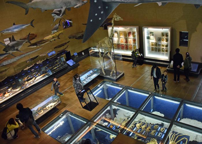 上からみた北九州市立いのちのたび博物館の生命の多様性館の展示