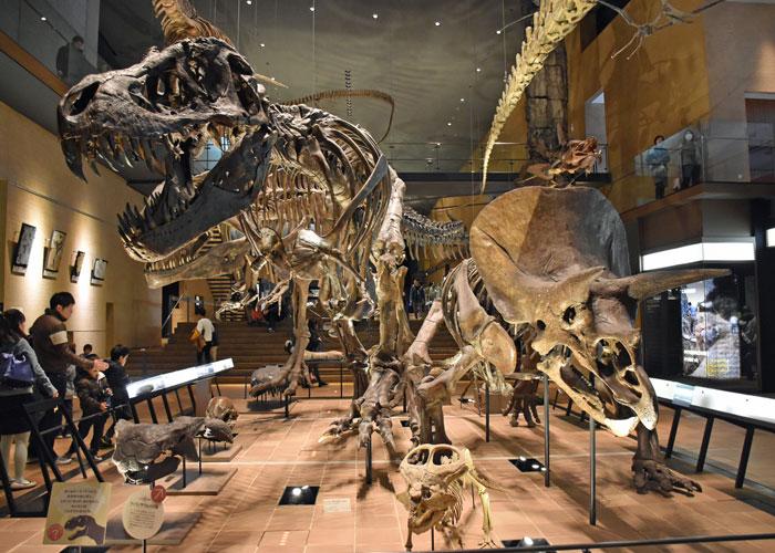 ティラノサウルスとトリケラトプスの全身骨格 いのちのたび博物館