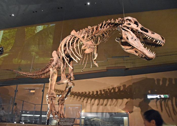 「ティラノサウルス・レックス スーの全身骨格模型」いのちのたび博物館
