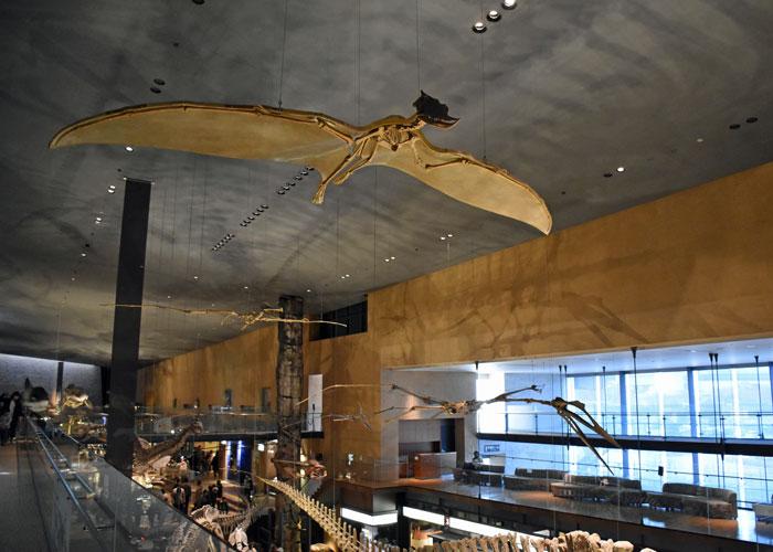 ズンガリプテルスなど翼竜の骨格復元模型:北九州市立いのちのたび博物館