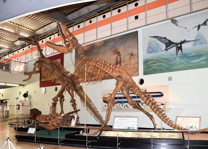 京都市青少年科学センターにあるサウロロフスとタルボサウルスの全身骨格模型