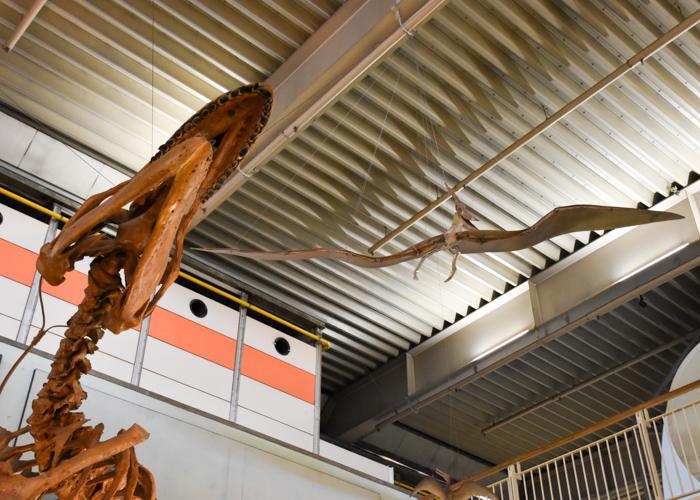 京都市青少年科学センターの恐竜タルボサウルスと翼竜プテラノドン
