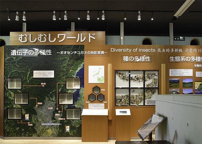 昆虫の展示「むしむしワールド」京都市青少年科学センター