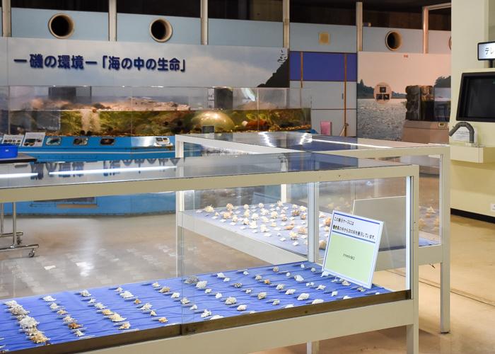 京都市青少年科学センターの貝殻の展示