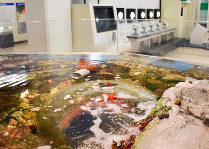 京都市青少年科学センター「磯の環境」の展示水槽