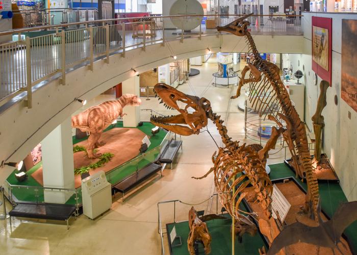 京都市青少年科学センターの吹き抜けから見た恐竜の全身骨格