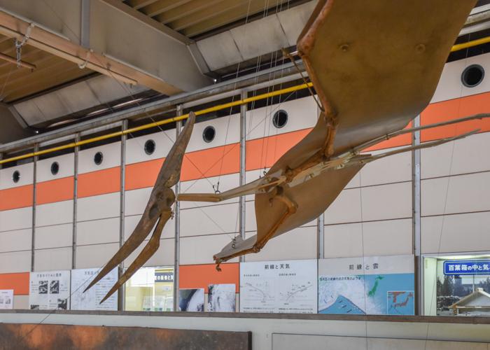 京都市青少年科学センターのプテラノドンの全身骨格1