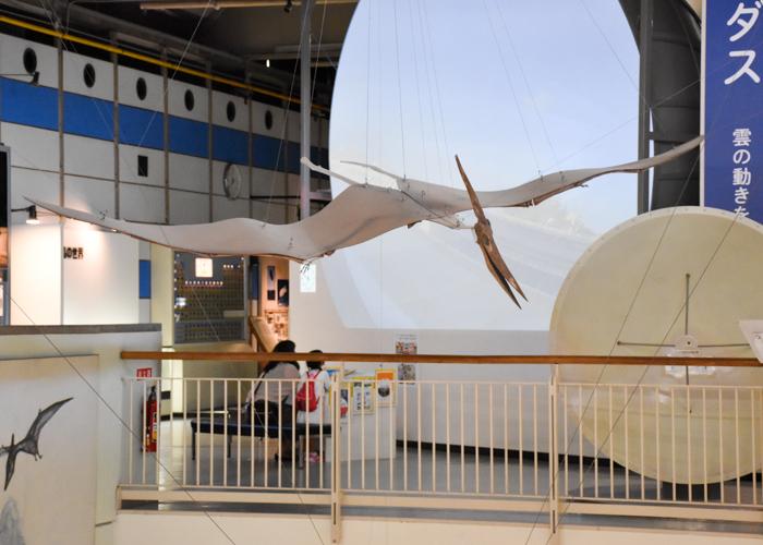 京都市青少年科学センターのプテラノドンの全身骨格2