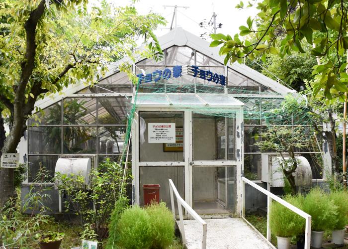 京都市青少年科学センターのチョウの家