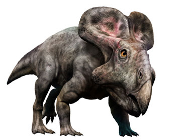 プロトケラトプスのイラスト