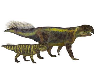プシッタコサウルスのイラスト